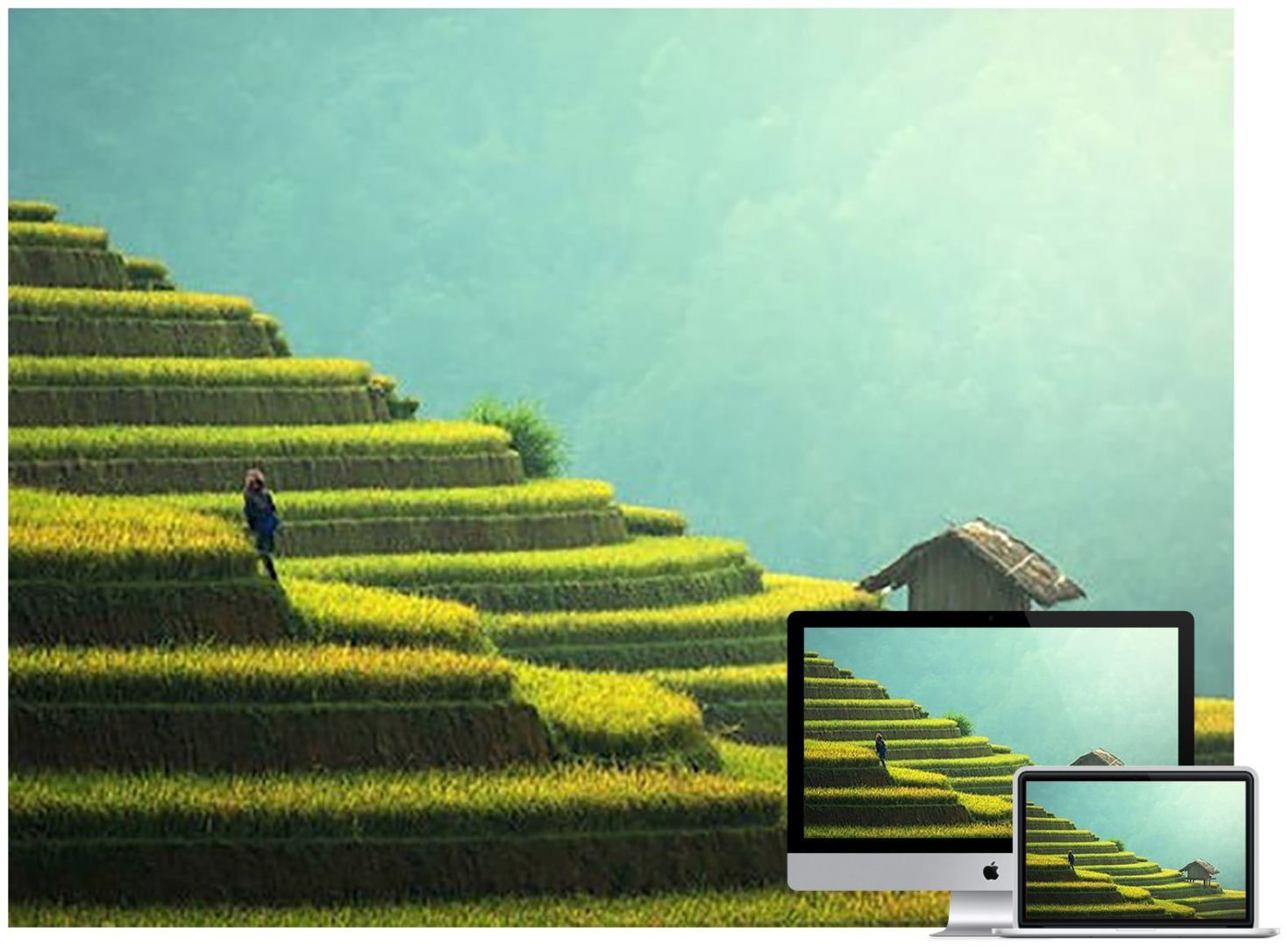 agriculture-asia-cat-china