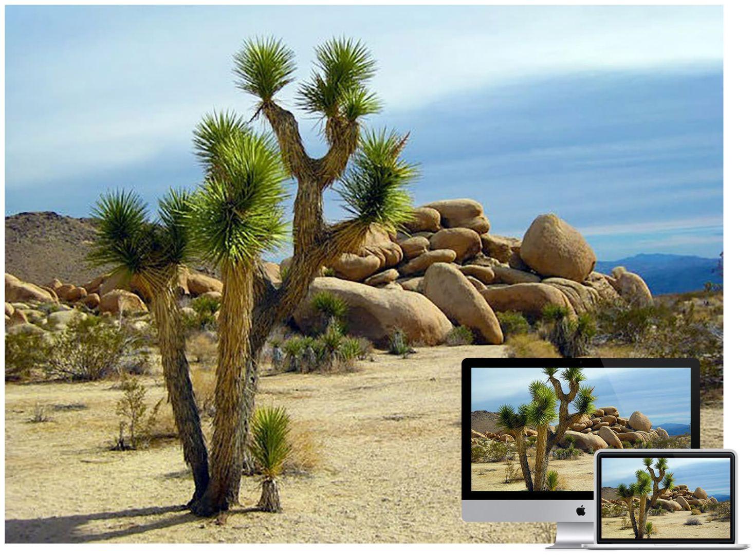 america-arid-bushes-wallpaper