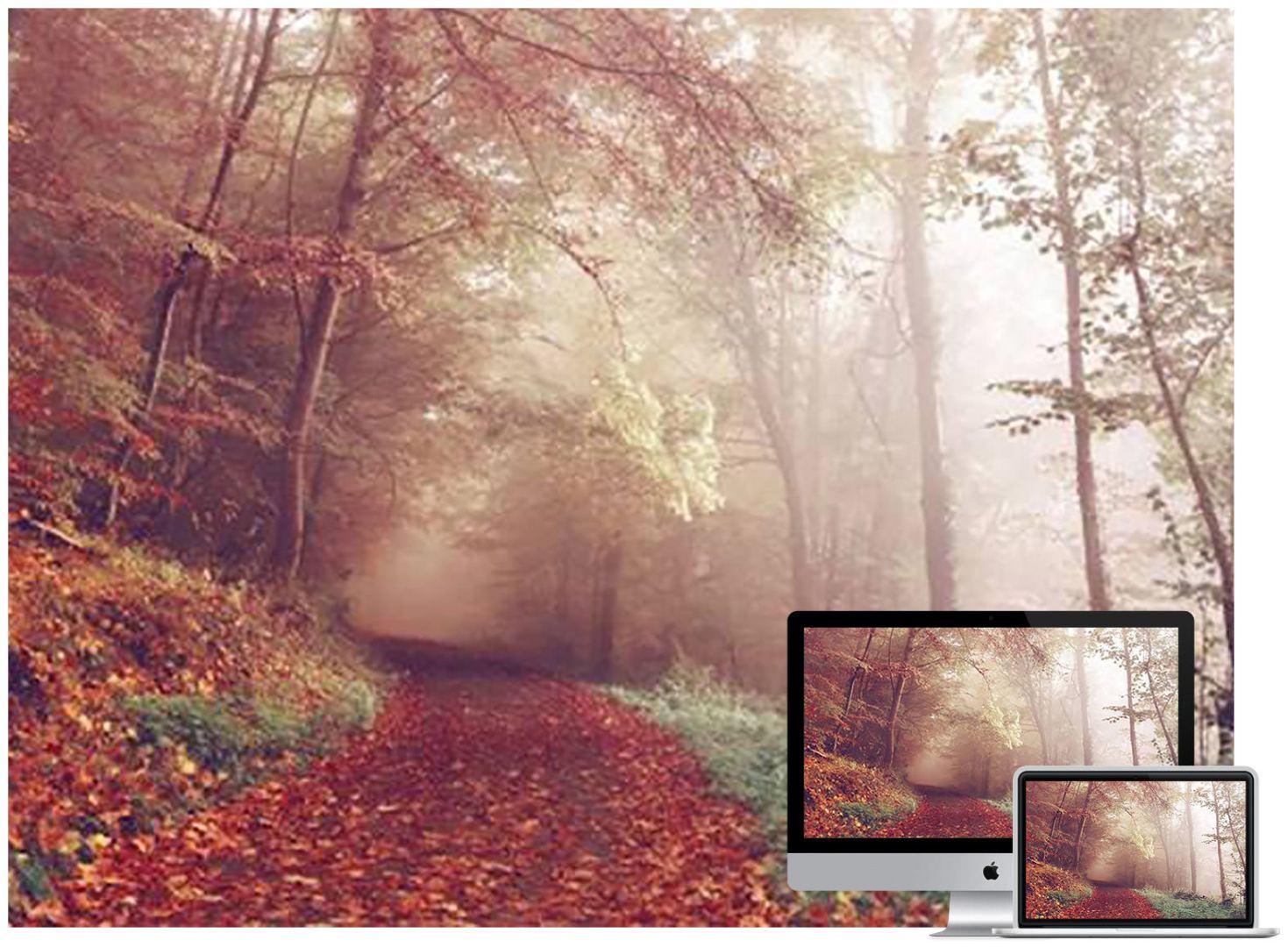 autumn-path-wallpaper