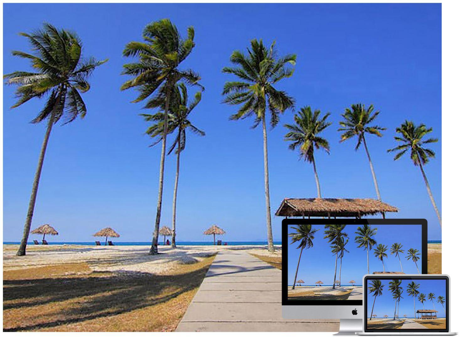 coconut-trees-wallpaper