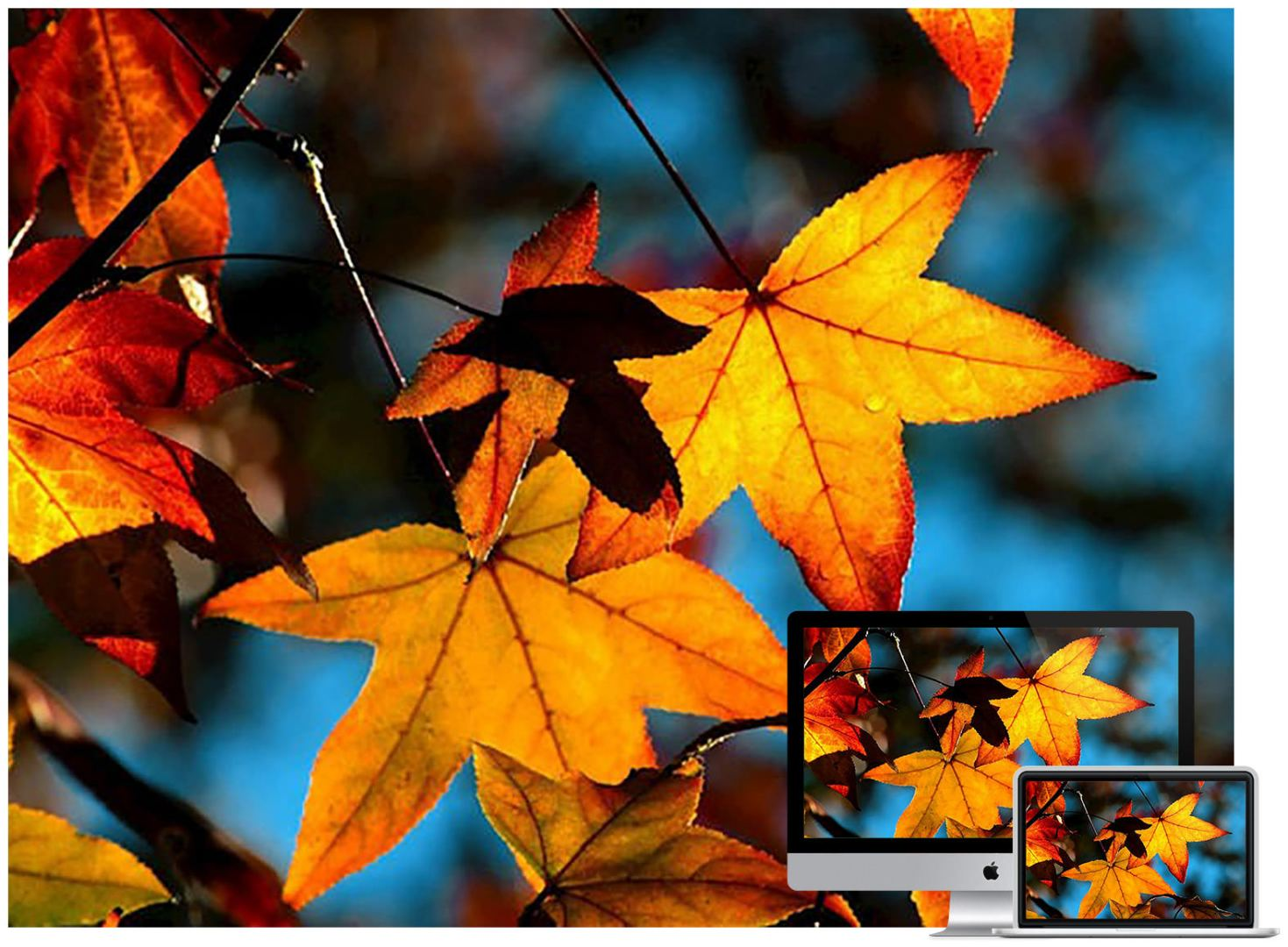 colors-of-fall-wallpaper