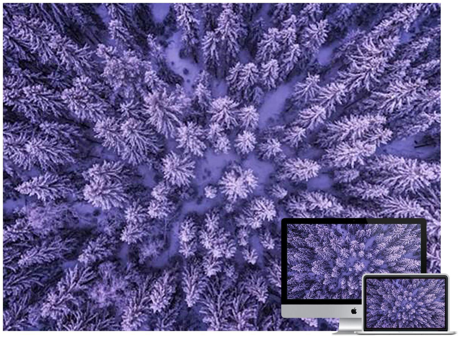 snowy-forest-t2-wallpaper
