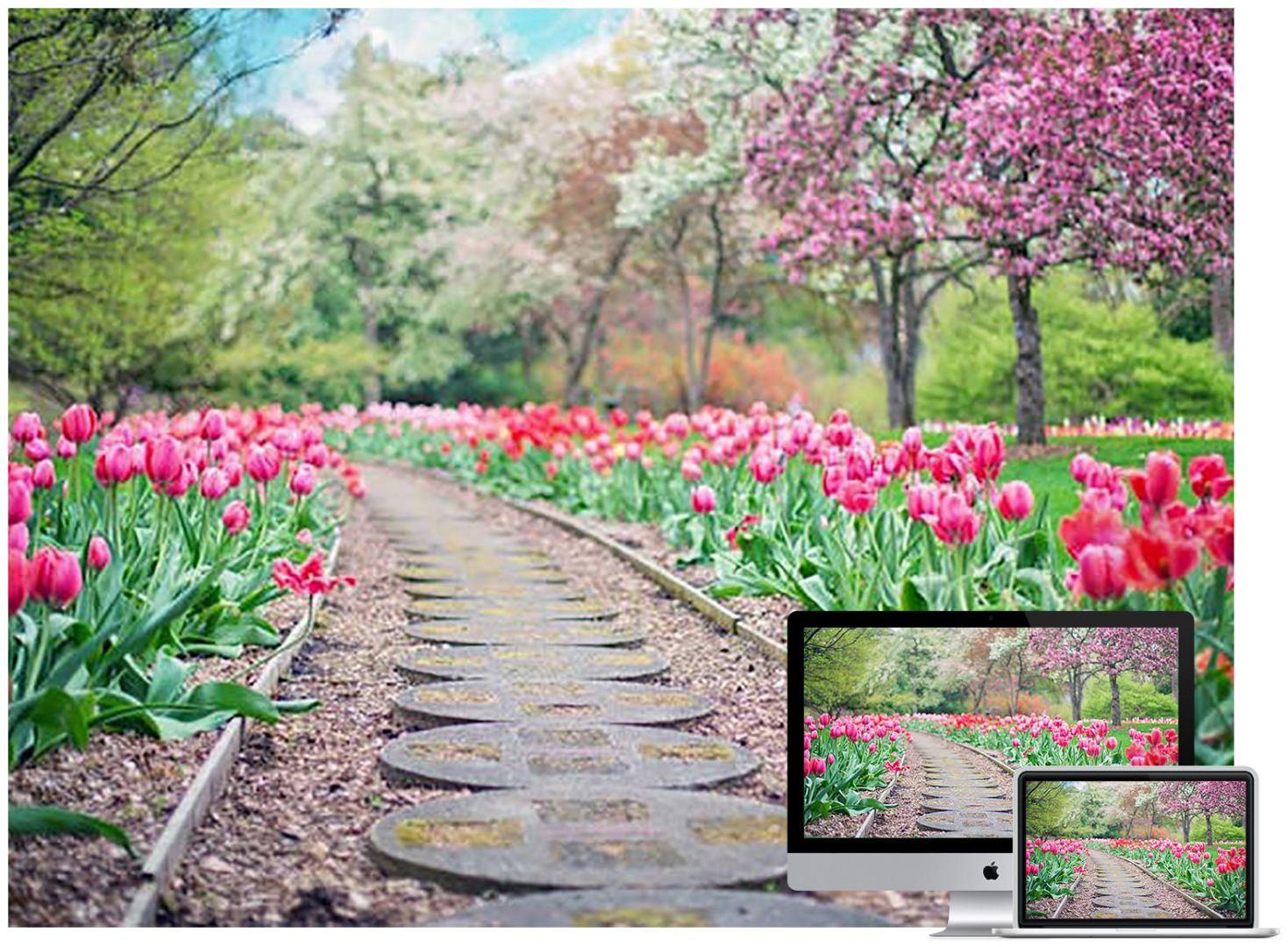 tulips-park-wallpaper