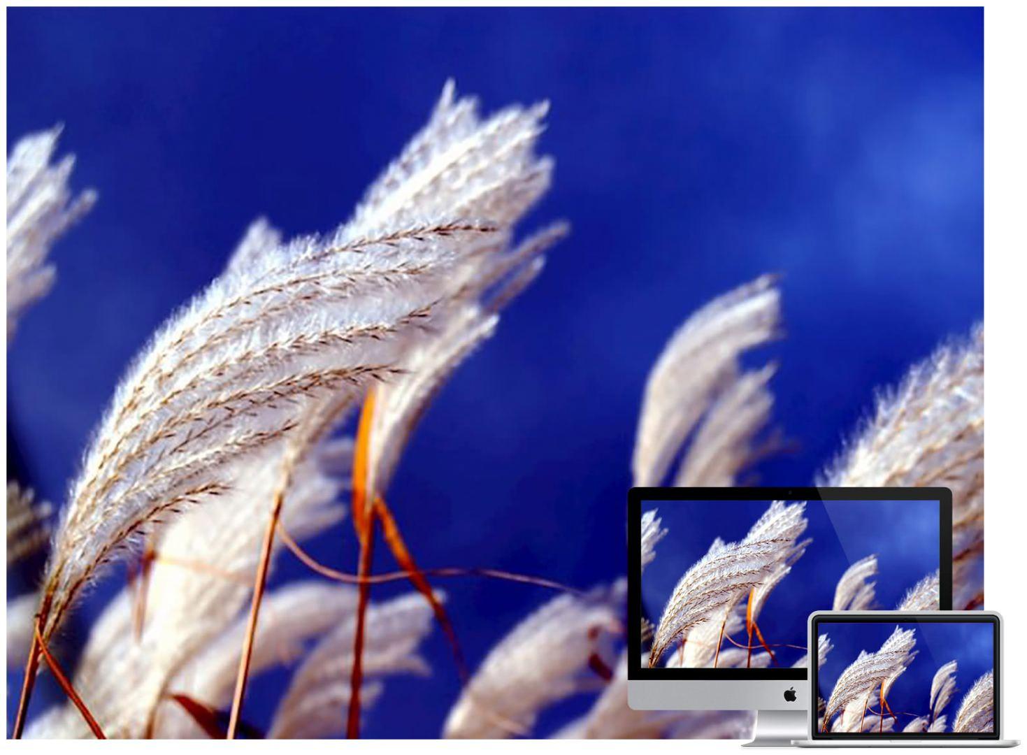 white-wheat-wallpaper