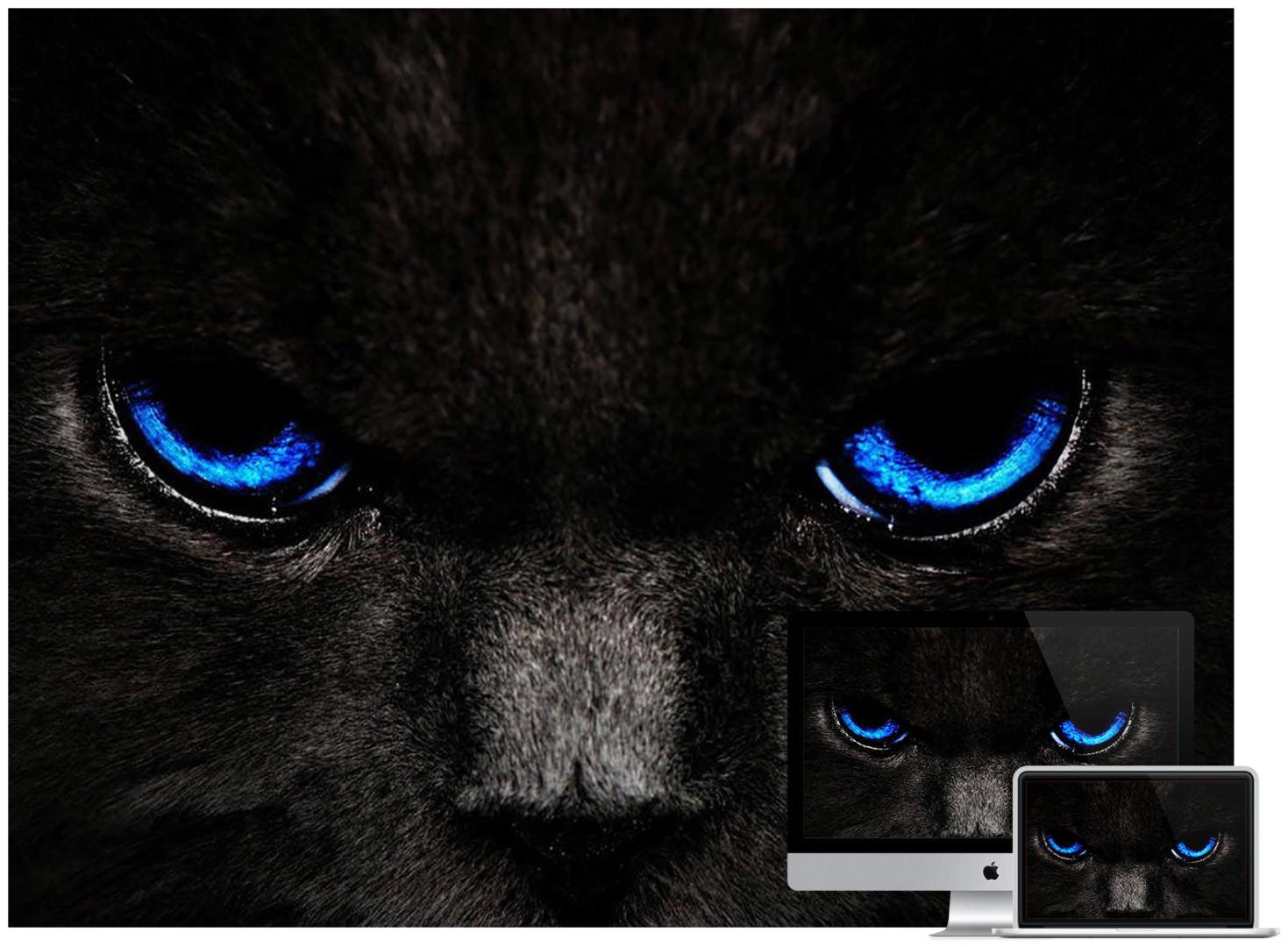 dark-cat-wallpaper