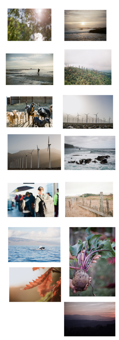 environmental nonprofit layout