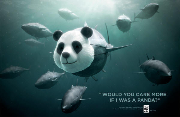 would you care more if i'm panda