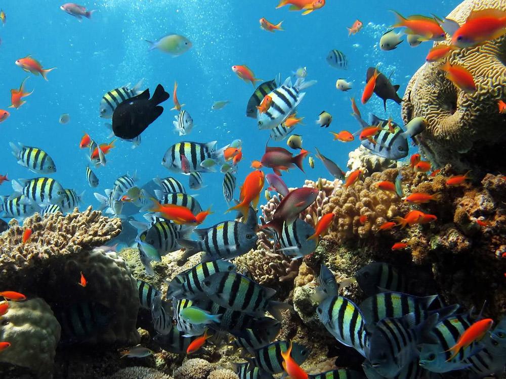 beautiful-fish-underwater