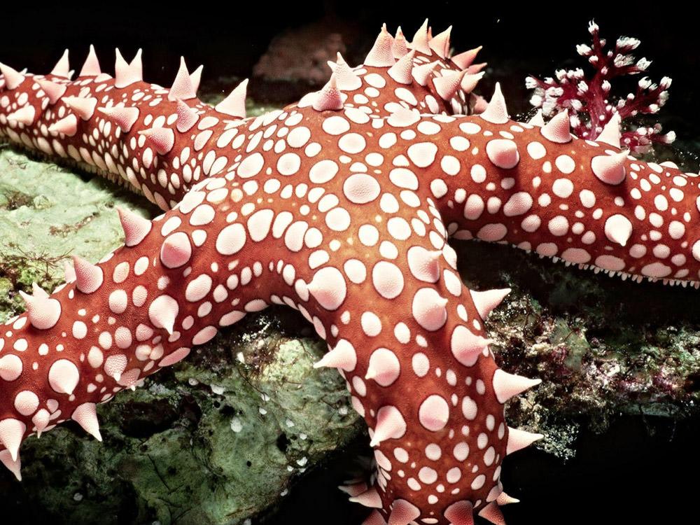beautiful-starfish