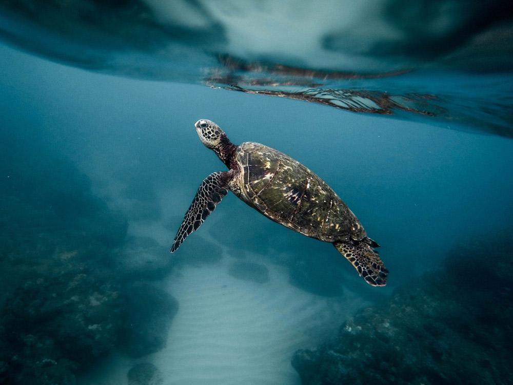 closeup-of-tortoise