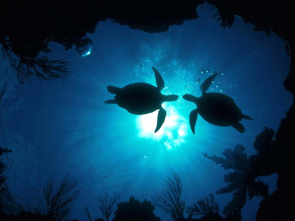 dark-turtle