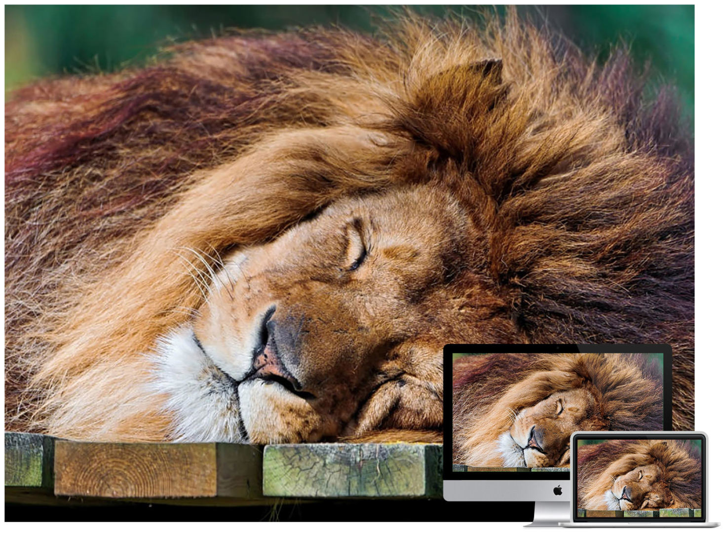 wildlife animal wallpapers