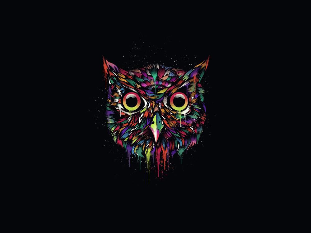 owl-minimalism
