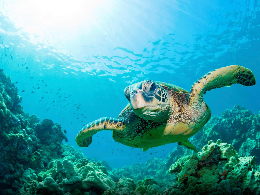 under-ocean-turtle