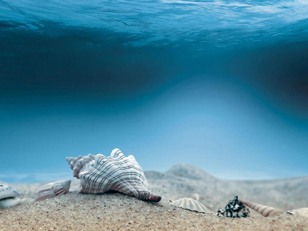 underwater-sea-shells
