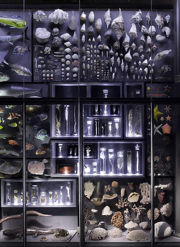 biodiversity-organized-neatly