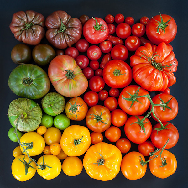 tomatoes-organized-neatly
